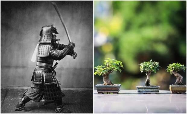 Какие правила соблюдали японские самураи, и Что должны были делать их жёны, если овдовели