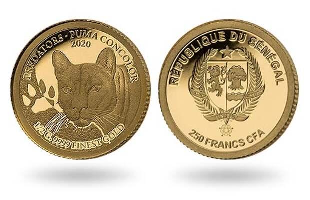 Сенегал дополнил серию «Хищники» золотой монетой Puma concolor
