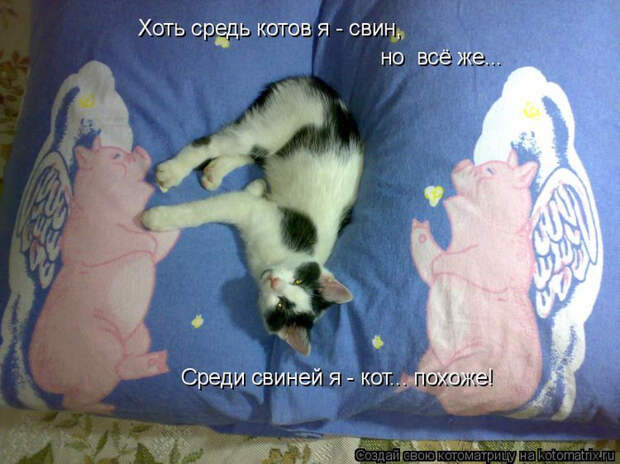 kotomatritsa_p (1) (700x524, 368Kb)