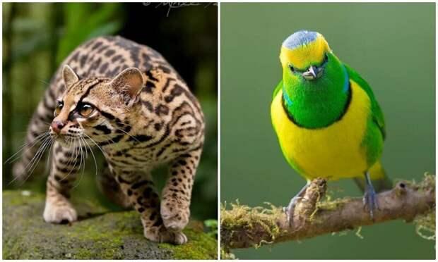 Удивительные обитатели тропических лесов Коста-Рики в объективе Суприта Саху