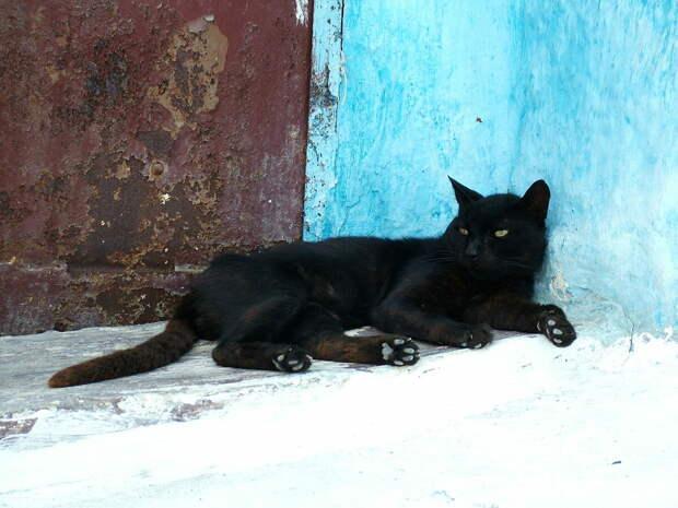 Кот отблагодарил нового хозяина за хорошее отношение