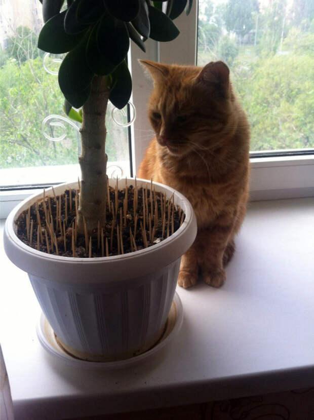 Защищаем растения от котов. | Фото: fishki.net.