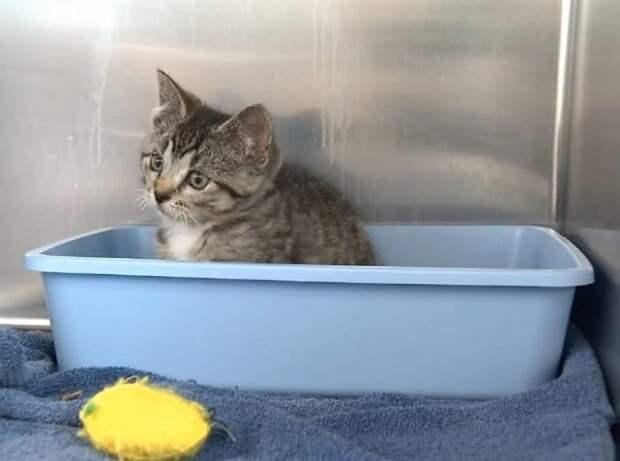 Котенок в ванночке