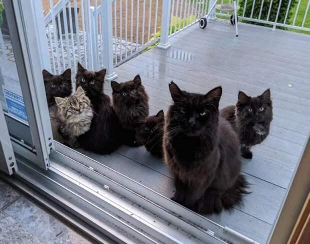 Бездомная кошка безошибочно определила, кому доверить своих котят