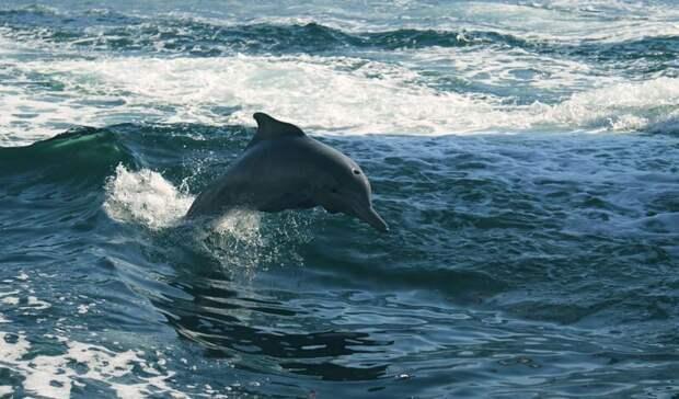 НаФарерах врезультате массовой охоты убили 1,4 тысячи дельфинов