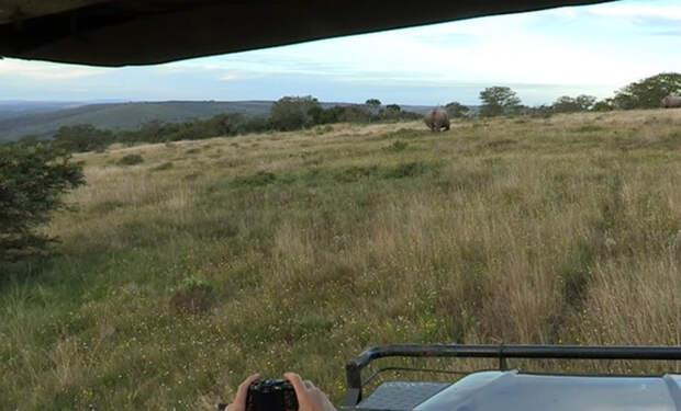 Лесник из африканского заповедника показал, как остановить бегущего носорога звуком машины