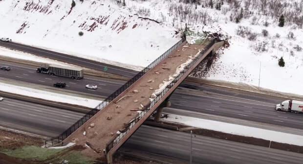 Ученые установили камеру на мосту для животных и посмотрели, кто переходит дорогу
