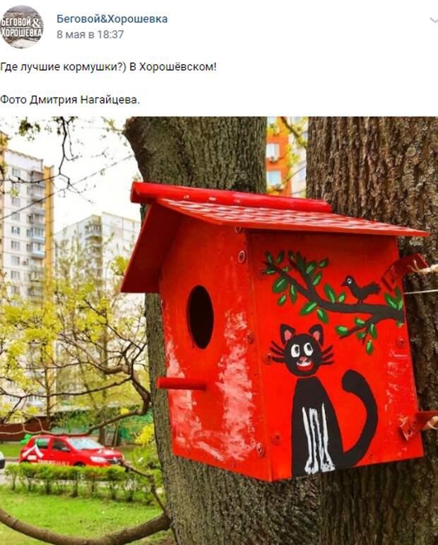 Фото дня: в Хорошевке птиц решили подружить с кошками
