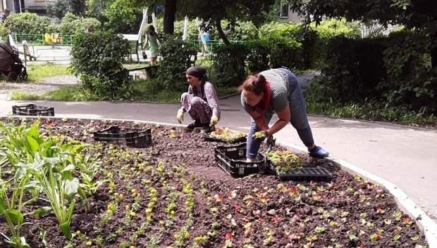 Рабочие приступили к высадке цветов в клумбы микрорайона Климовск