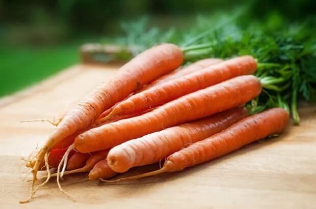 В российском союзе производителей овощей и фруктов пообещали дешевую морковь