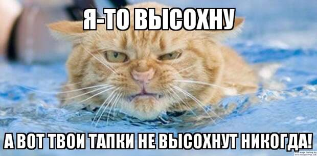 1453387462_memy-s-zhivotnymi-1