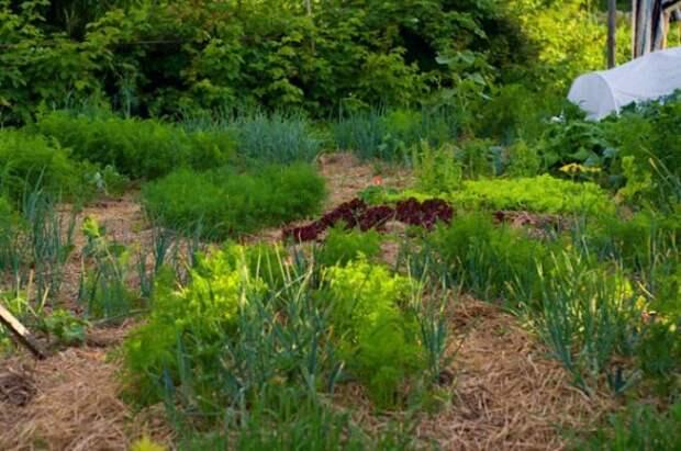 огород под соломой