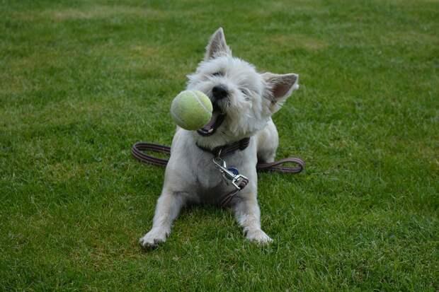 собака/фото:pixabay
