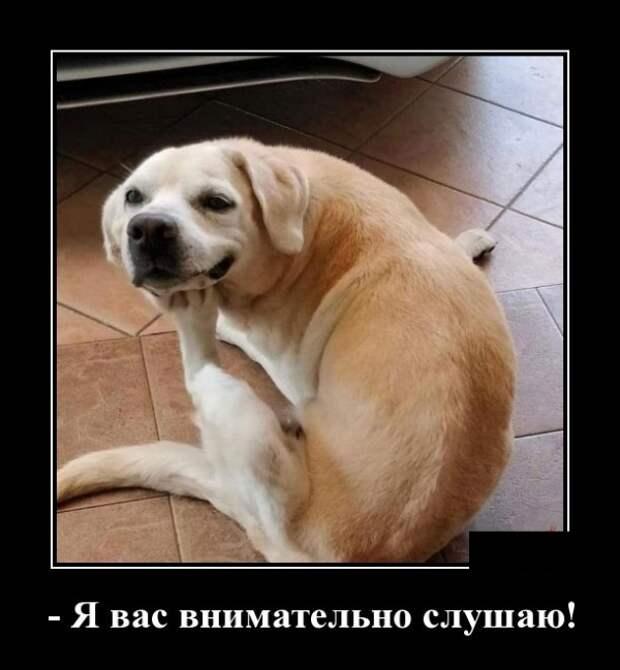 Такие позитивные животинки))