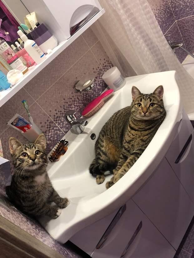коты в раковине