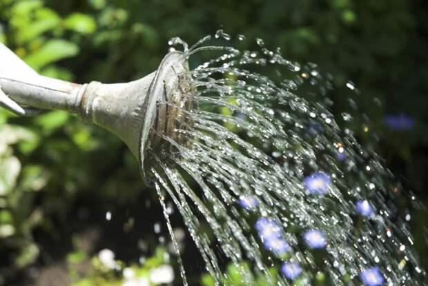 Баклажаны просто обожают воду, поэтому выжить в сухой среде для них нереально