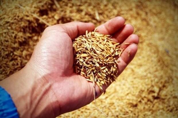 Абрамченко: Урожай зерновых в 2021 году может составить 120 млн тонн