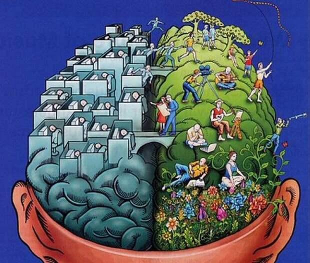 Левши, как правило, чаще используют правое полушарие своего мозга. левша, полушарие мозга, правша, рука, удивительное, факты