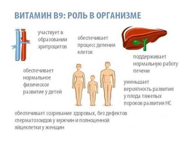 Витамин, который необходим организму после 40 лет и во время беременности