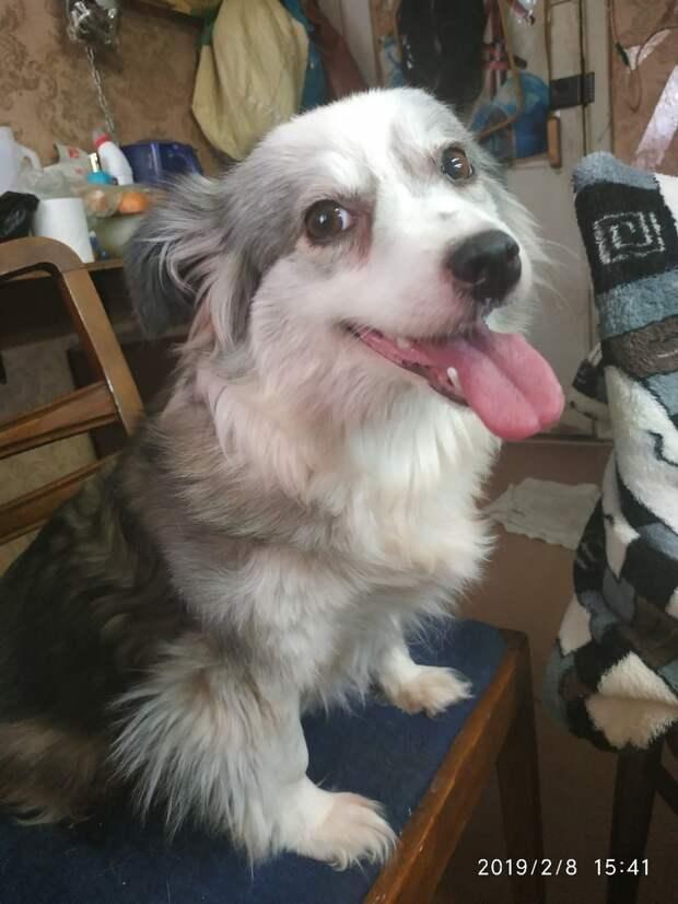 радостная собака