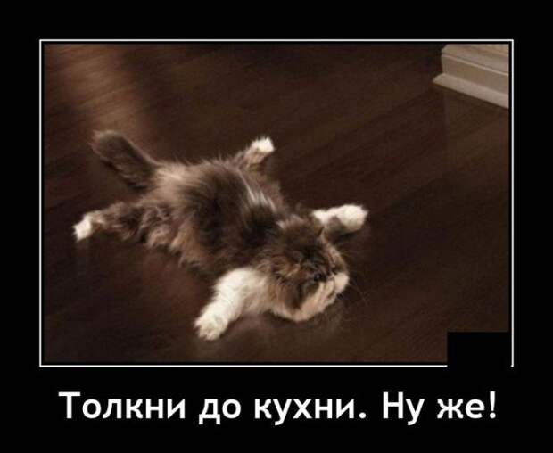 Демотиватор про ленивого кота