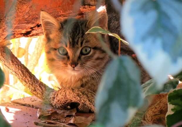 Когда помоечная кошка на моих глазах обрела семью - тогда я поверила, что чудеса бывают