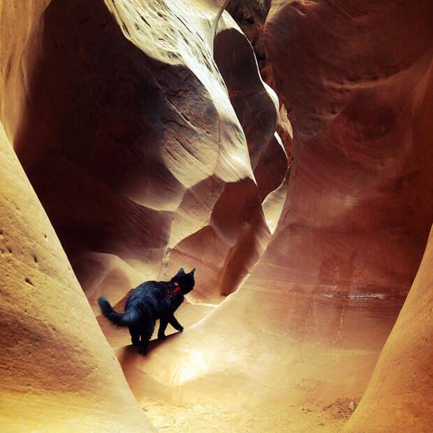 Кошка-скалолаз ходит в горы со своим хозяином