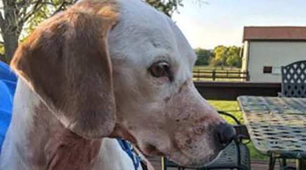 Мужчина привел в клинику бездомного пса и попросил помощи. Спасителя посчитали героем, но слегка ошиблись