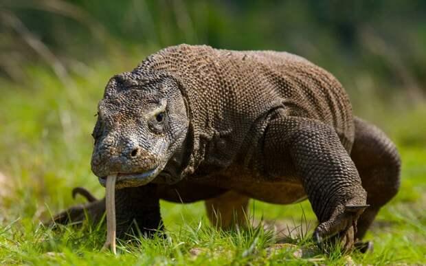 6 самых ядовитых существ на планете