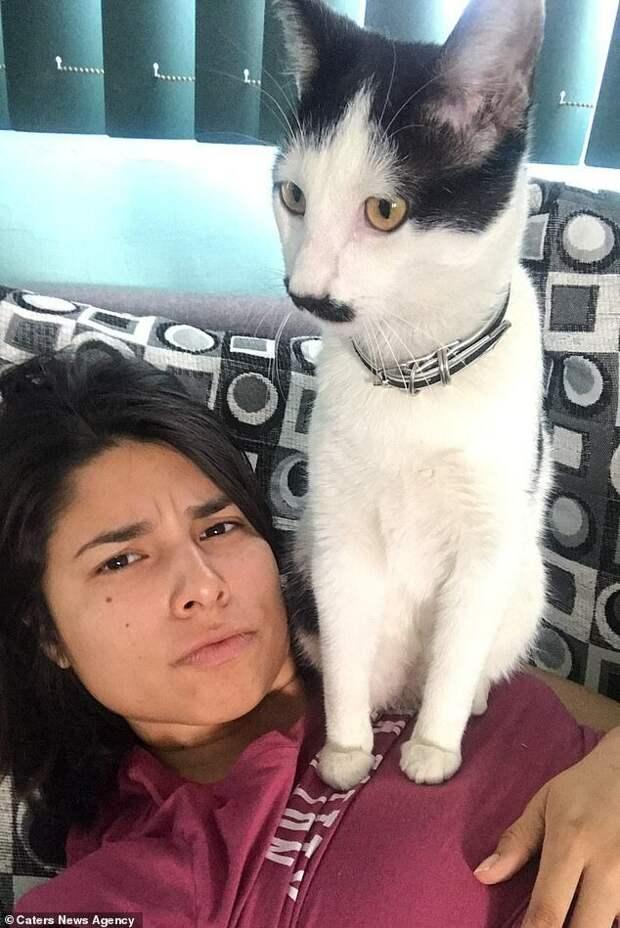 Кот Альберто с необычными «усами» ворует сердца мексиканских кошечек