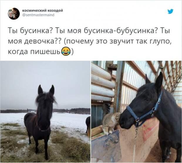 «О чем вы говорите со своими животными?»: забавный тренд о питомцах в Твиттере