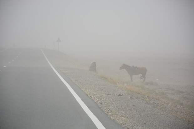 6 жителей Монголии стали жертвами песчаной бури