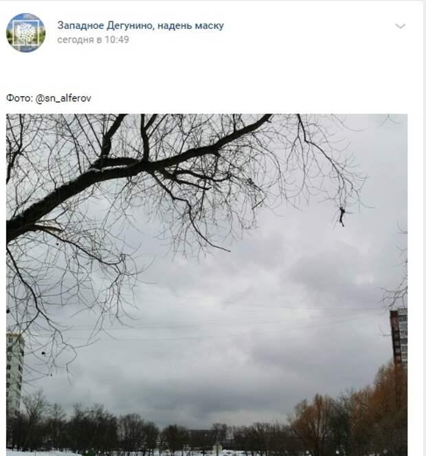 Фото дня: у Дегунинского пруда начались «весенние будни»