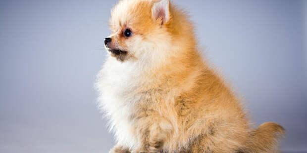 Шведские ученые: Человек способен «заражать» собак стрессом