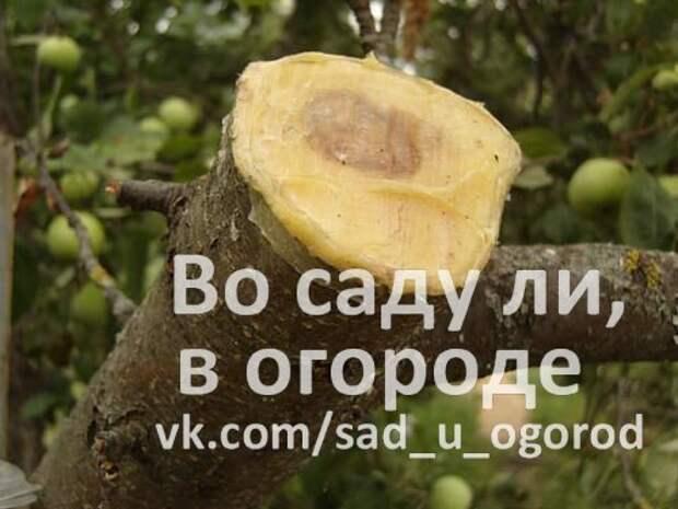 Сломалась яблоня