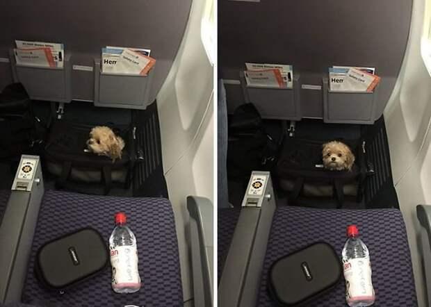 Животные в самолете: забавно и трогательно