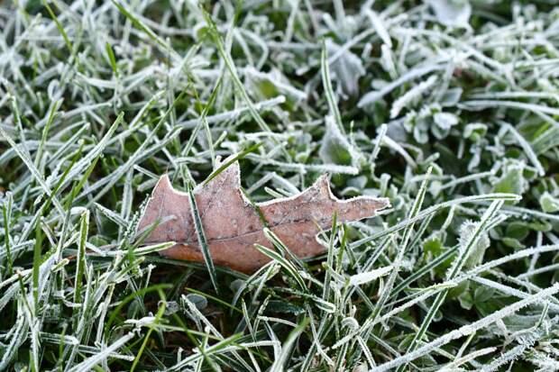 По ночам в выходные в Удмуртии ожидаются заморозки