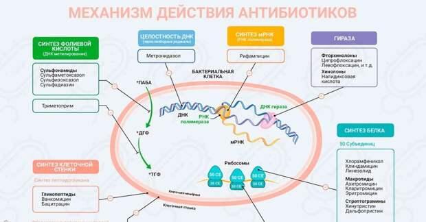 Вред, который наносят антибиотики организму
