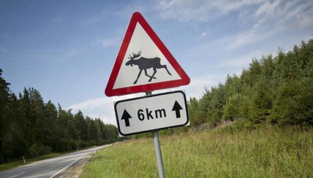 В ГИБДД рассказали о выходах диких животных на трассы в Карелии