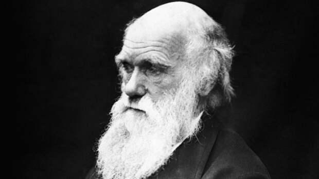 Британские ученые опровергли теорию Дарвина
