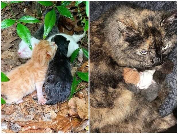 Промокшая мать в грозу прятала новорожденных котят, как могла история, история спасения, коты, котята, кошка, спасение животных