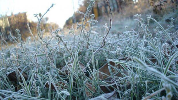 Сегодня Краснодарском крае ударили заморозки