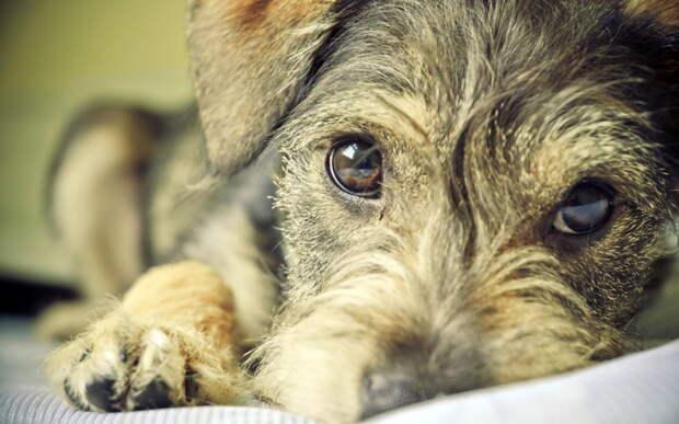 20 удивительных и красивых фотографий беспородных собак