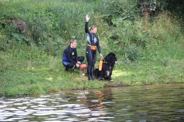 Собаки помогают спасать людей на водоёмах столицы