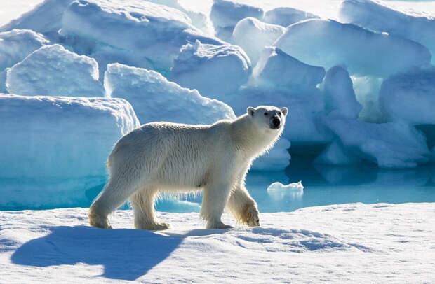 Большой Арктический заповедник - INFOnotes
