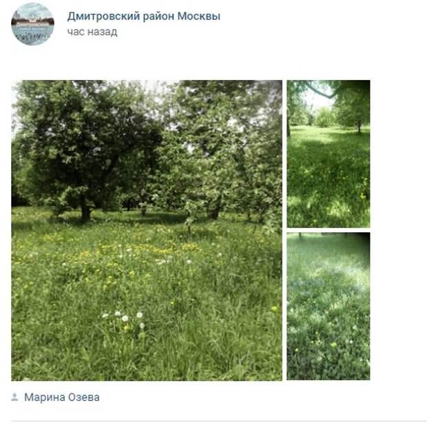 Фото дня: разнотравье в парке «Ангарские пруды»