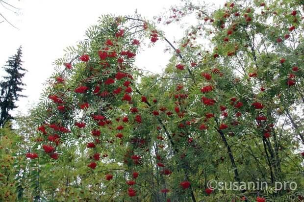 В Ижевске впервые создадут концепцию удмуртского сада