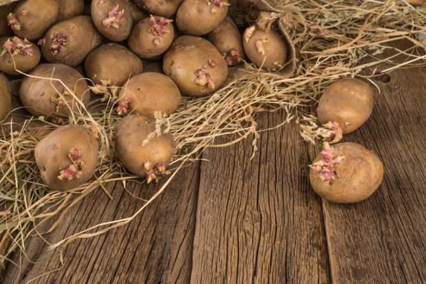 Калибровка картофеля