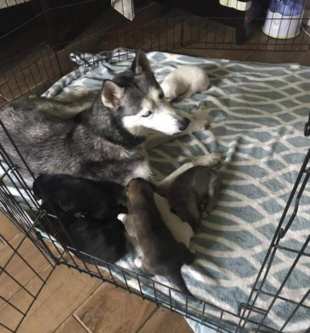 Прямо в машине женщина приняла роды у собаки!