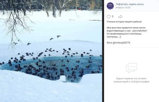 Фото дня: утки для медитации из Лефортовского парка